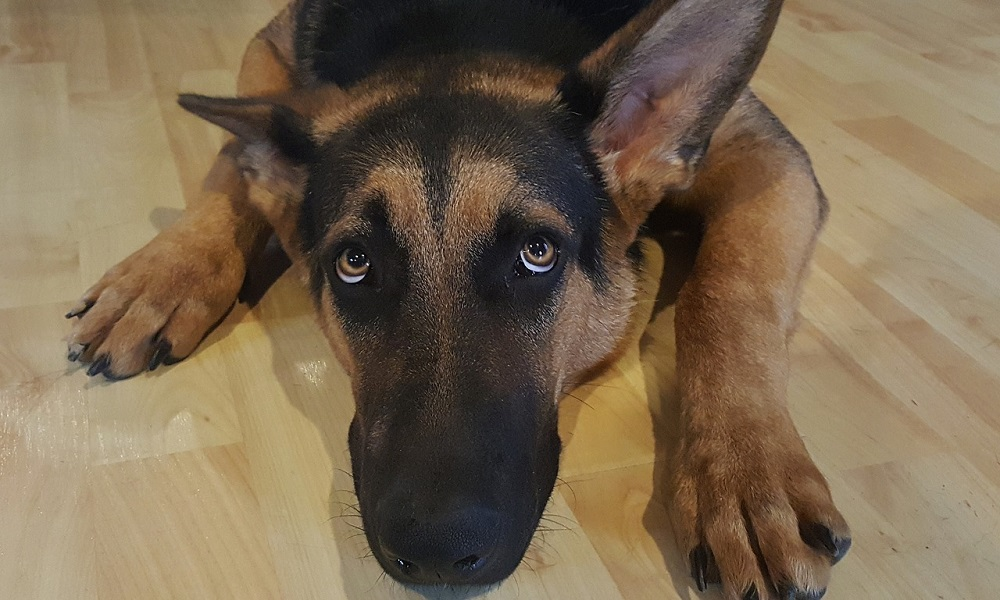 What are the Symptoms of a Scared Dog