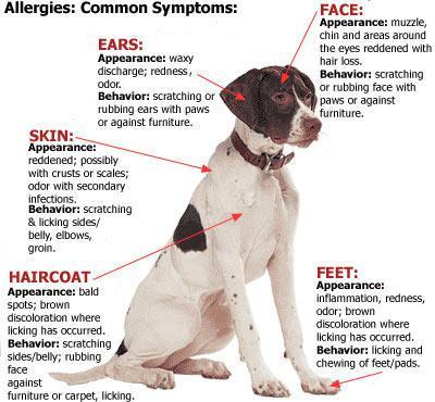 what are the symptoms of dog allergies