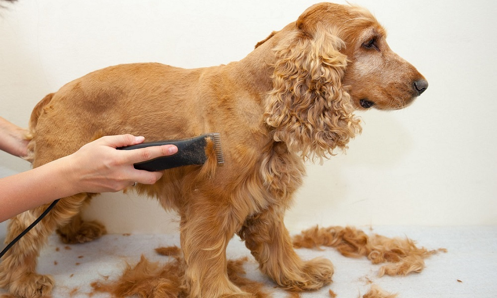 Cutting Dog Hair
