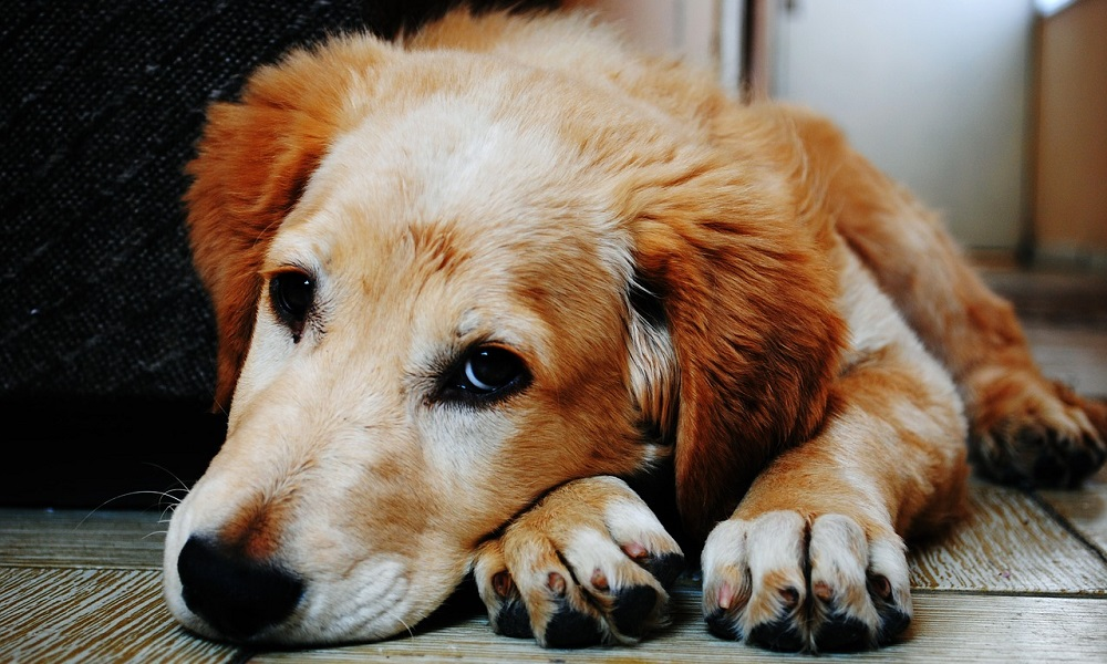 What Should I Do if My Dog Doesn't Eat