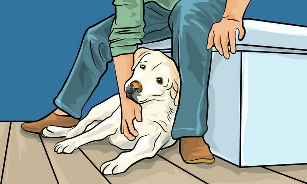 Why Do Dogs Lean on People