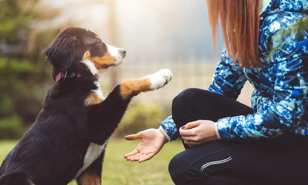 Misconceptions About the Dog Not Listening